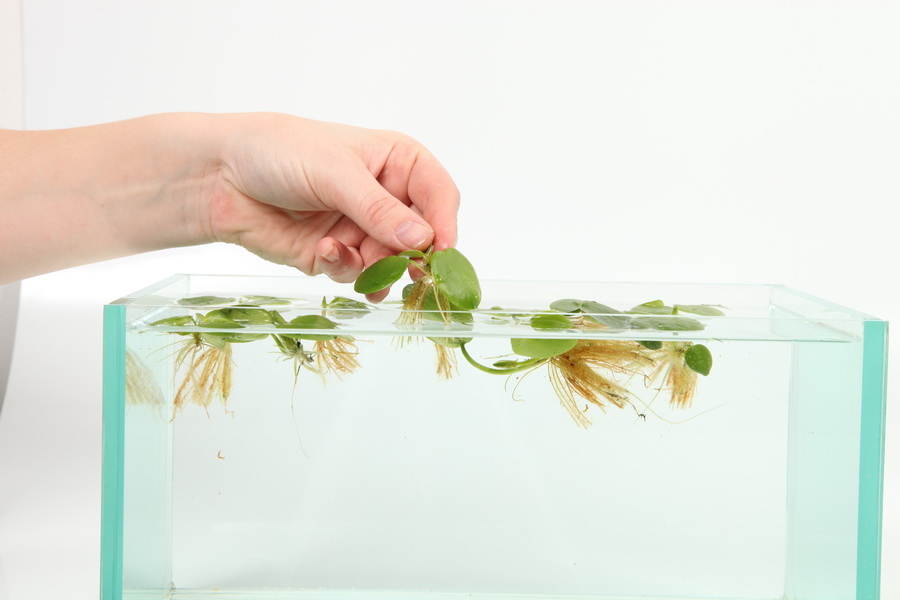 Можно ли сажать аквариумные растения в обычную землю универсальную 69