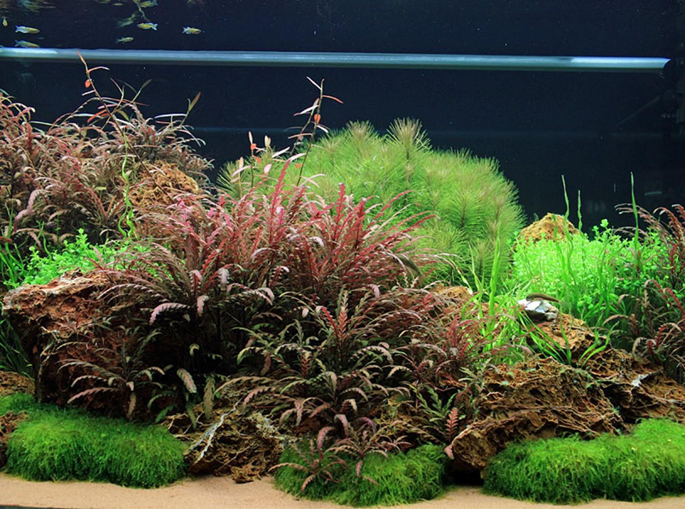 Oliver Knott Tropica Aquarium Plants