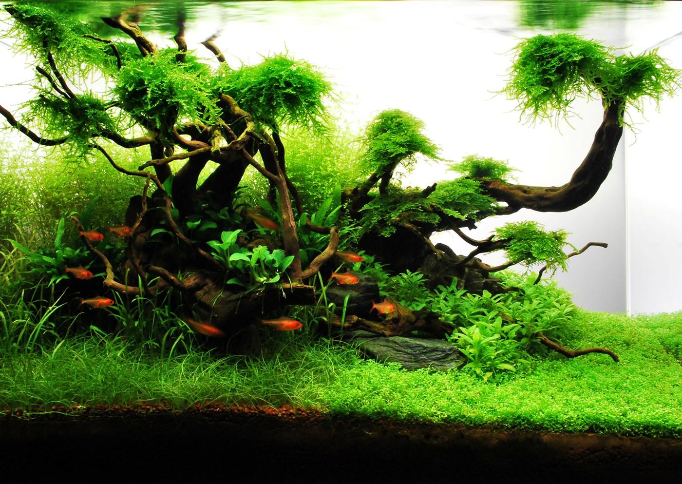 1000+ ideas about Aquarium 60l on Pinterest
