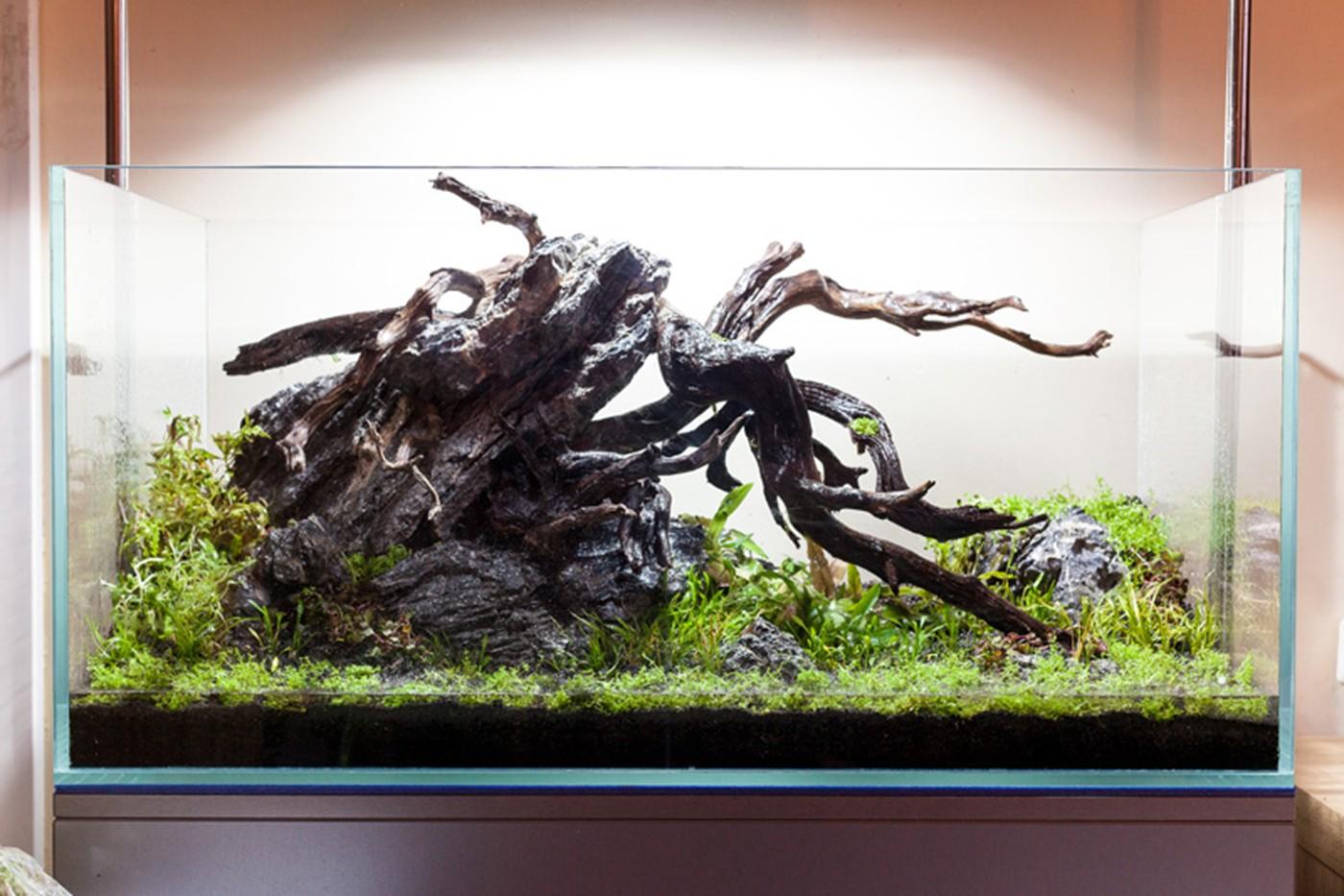 Layout 86 Stuart Worrall Tropica Aquarium Plants