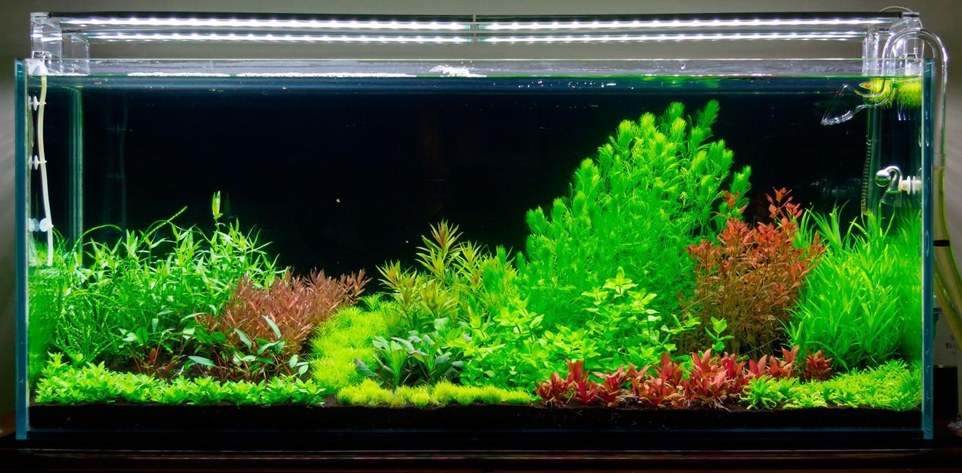 Layout 105 Pedro Rosa Tropica Aquarium Plants