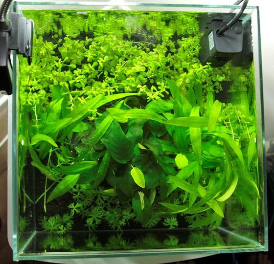 Layout 30 Tropica Tropica Aquarium Plants