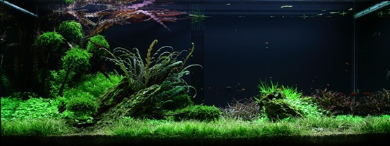 layout 50 edward franklin tropica aquarium plants. Black Bedroom Furniture Sets. Home Design Ideas