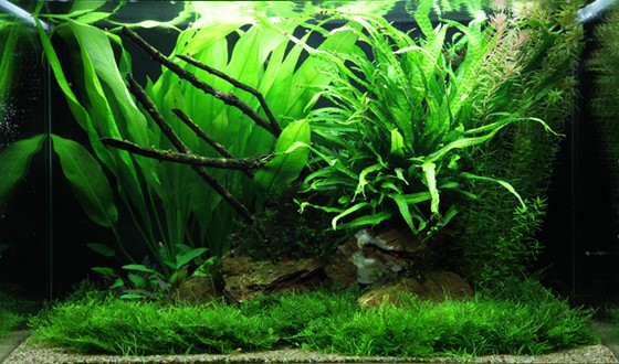 Layout 63 Tropica Tropica Aquarium Plants