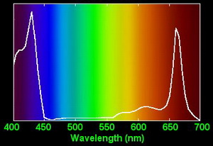 Chlorophyll Absorption Spectrum