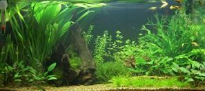 The right light for your aquarium - Tropica Aquarium Plants