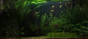 The right light for your aquarium tropica aquarium plants for Aquarium fish calculator