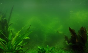 Plankton Algae