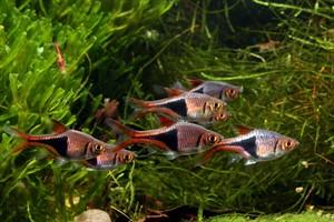 algenwachstum im aquarium