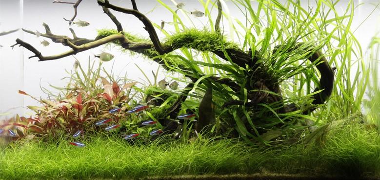 Starting a new aquarium Tropica Aquarium Plants