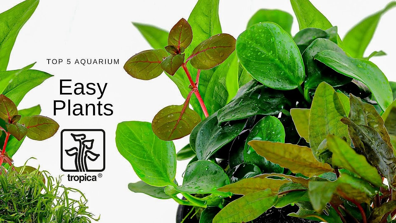 NEW! TOP 5 Easy Plants