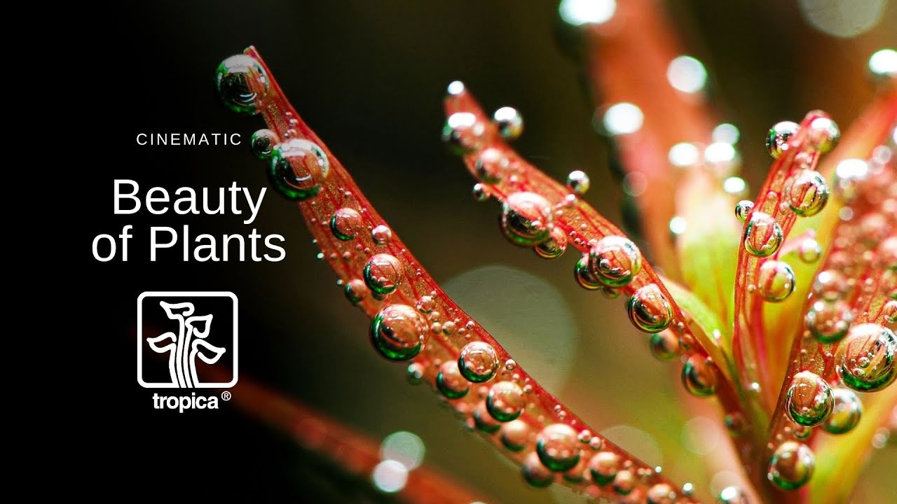 NEW VIDEO! The beauty of aquarium plants