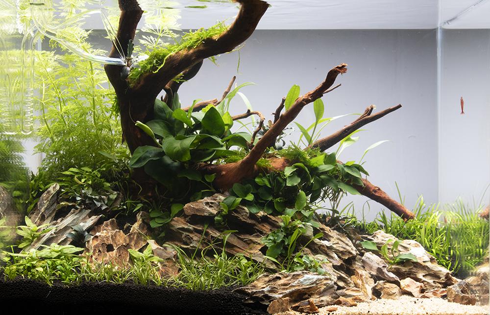 Make Your Aquarium A Success Tropica Aquarium Plants
